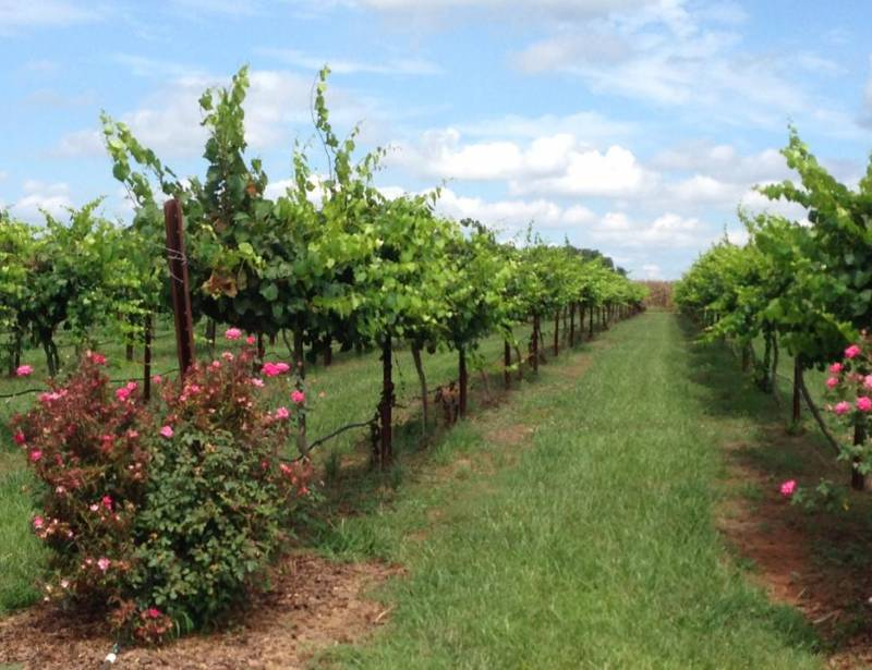 Cauble Creek Vineyard